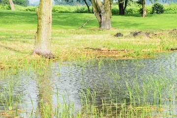 Flooded Field by Tree