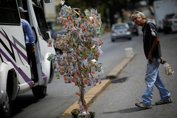 A man looks at Venezuelan bolivar notes hung to resemble a tree, in Caracas
