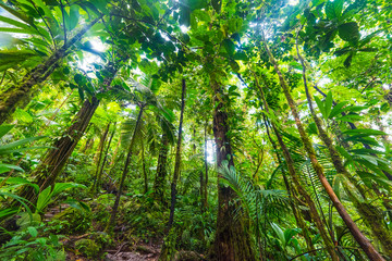 Lush tropical vegetation in Basse Terre jungle in Guadeloupe