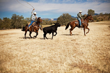 Two ranchers lassoing a runaway cow