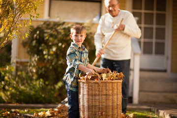 Boy helping his grandfather gather leaves in the backyard.