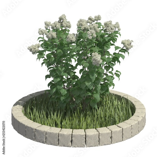 Bush 3d illustration isolated on the white background