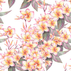 Hand painted watercolor illustration. Seamless pattern with flowers of plumeria.