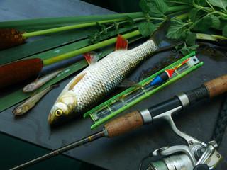River chub and fishing gear.