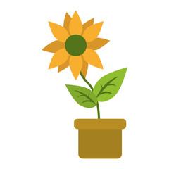 Sunflower in pot cartoon