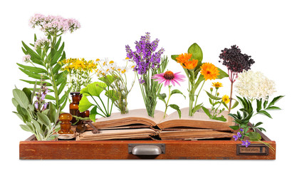 Medical plants with old books and letter case