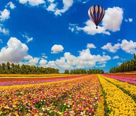 Above the flowers flying big bright balloon