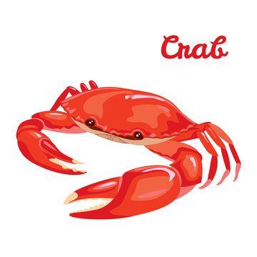 Red crab vector illustration in simple flat style isolated on white background. Seafood product design template.