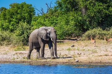 Watering elephant