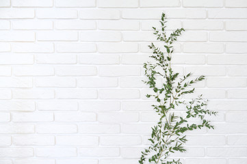 Eucalypt branch on white brick wall background. Home decor branch of eucalyptus attached to a brick...