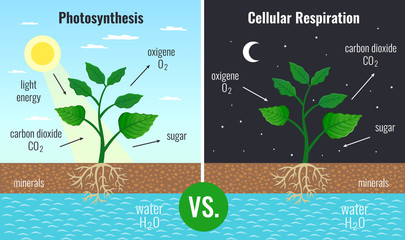 Photosynthesis Educational Posters Set
