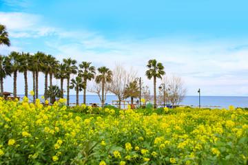 Latchi Beach in spring, Polis (Akamas) - Cyprus