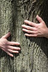 Man's hands hugging tree