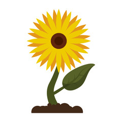 Sunflower plant cartoon isolated