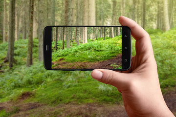 Smartphone in hand photographing the nature of the forest on the screen. Forest landscape photos for posting on social networks.