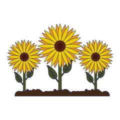 sunflowers gardening cartoon isolated