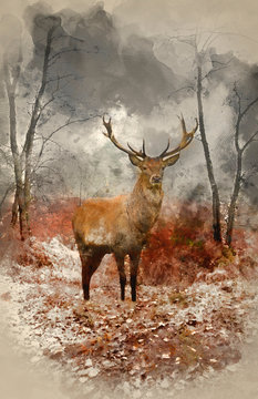 Watercolour painting of Red deer stag in foggy misty Autumn forest landscape at dawn