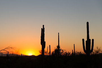 Lost Dutchman State Park nahe Phoenix in Arizona, USA