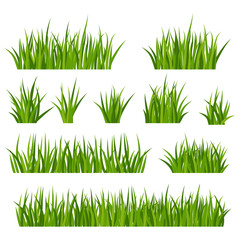 Bunches of green grass on meadow or lawn.