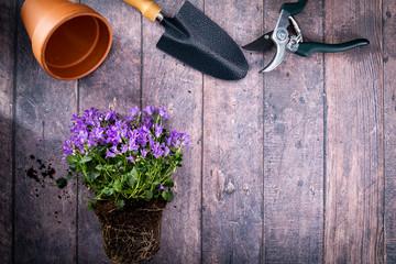 Przesadzanie roślin. Wiosenne kwiatki.