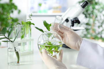 Lab assistant holding flask with leaves on blurred background, closeup. Plant chemistry