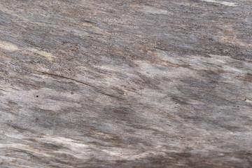 smooth grey wood texture