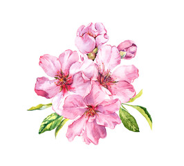 Pink spring flowers. Cherry blossom, almond, apple, sakura. Watercolor