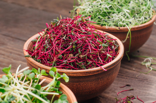 Micro greens sprouts of beetroot in ceramic bowl