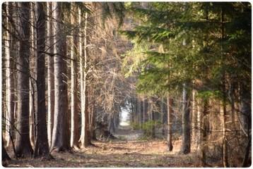 Leśny korytarz
