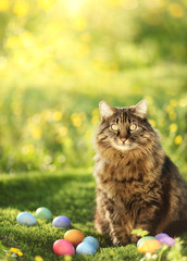 Collection of colorful Easter eggs guarded by cat