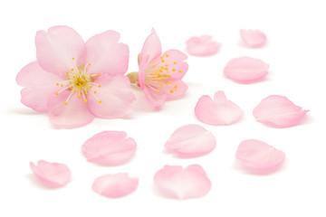 Tuinposter Kersenbloesem 桜 花 春 白 背景