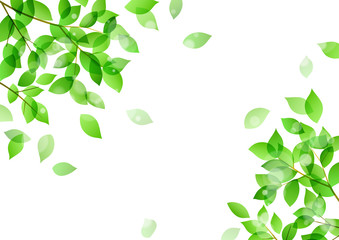 Fresh green and sunbeams background material