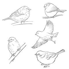 vector sketch of birds