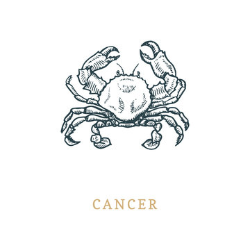Cancer zodiac symbol, hand drawn in engraving style. Vector graphic retro illustration of astrological sign Crab.