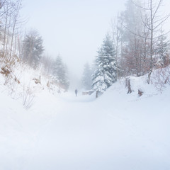 Walk in the winter foggy forest.