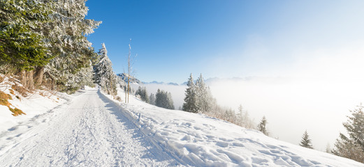 Joyful winter day before the Christmas holiday.  Road to the mountains. Switzerland. Rigi