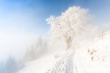 Winter snow-covered landscape.