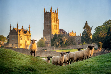 Fond de hotte en verre imprimé Sheep Cotswold sheep neer Chipping Campden in Gloucestershire with Church in background