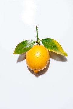 Bright Yellow Lemon on White