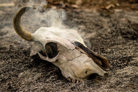 Cow horn or cow skull, people popular make as jewelry home, horn bones brown at bend but one side deduct place put on the ground in the garden with White smoke coming out of fracture of the skull.