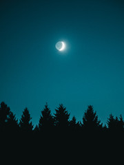 Lunar eclipse in clear sky over evergreen trees, Harz