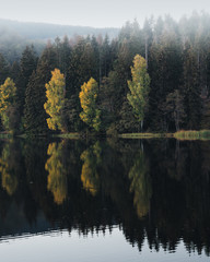 Evergreen forest reflected in lake, Harz