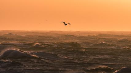 Seabird flies over choppy waves at sunset