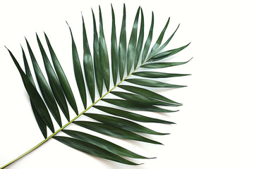Aluminium Prints Palm tree green tropical leaf on white background