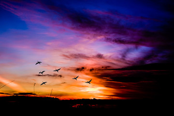 Flock of birds at dawn