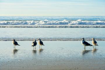 Seagull on the beach, California, San Diego, La Jolla Beach