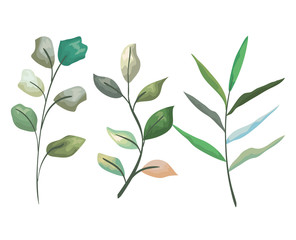 set exotic branches leaves plants