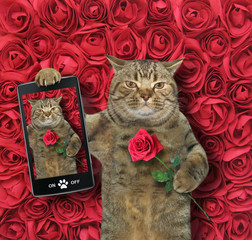 The funny cat takes a selfie with red rose. Background of roses.