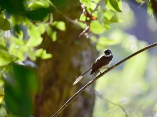 Bulbul on a branch