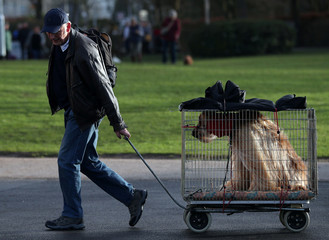 An owner pulls an Afghan Hound in a cage as they arrive for the third day of the Crufts Dog Show in Birmingham